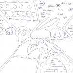 This is an example of the Invertebrate sensory homework.